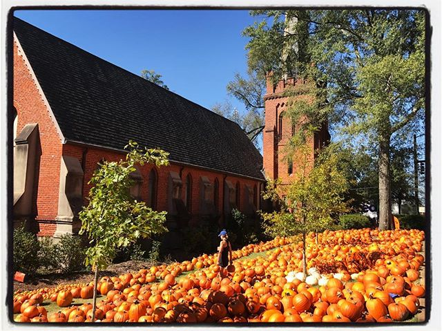 I admire the person who looked at this lawn and thought to themselves, 'What this Episcopal Church needs is MORE pumpkins!' #olemiss #meekjourno