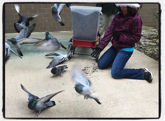 Feeding the pigeons at Meijer Gardens in GR. #dadlife